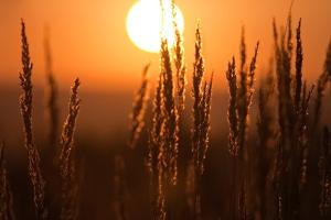 Mindestlohn: In der Landwirtschaft gilt für Saisonarbeitskräfte aktuell noch eine Übergangsregelung.