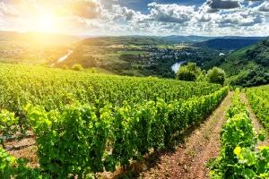 saisonarbeiter-landwirtschaft-ratgeber