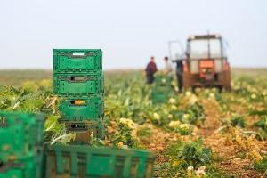 Erfüllen Saisonarbeitskräfte in der Landwirtschaft gewisse Voraussetzungen, besteht keine Sozialversicherungspflicht.