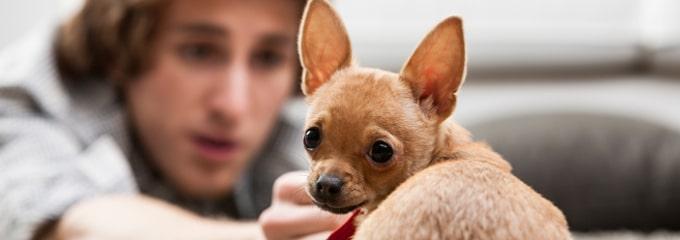 Sind Tiere am Arbeitsplatz erlaubt oder verboten?