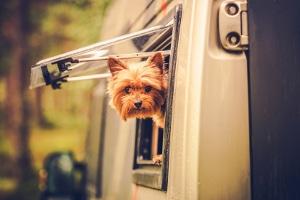 Es gibt einige tierfreundliche Arbeitgeber, die einen Bürohund erlauben.
